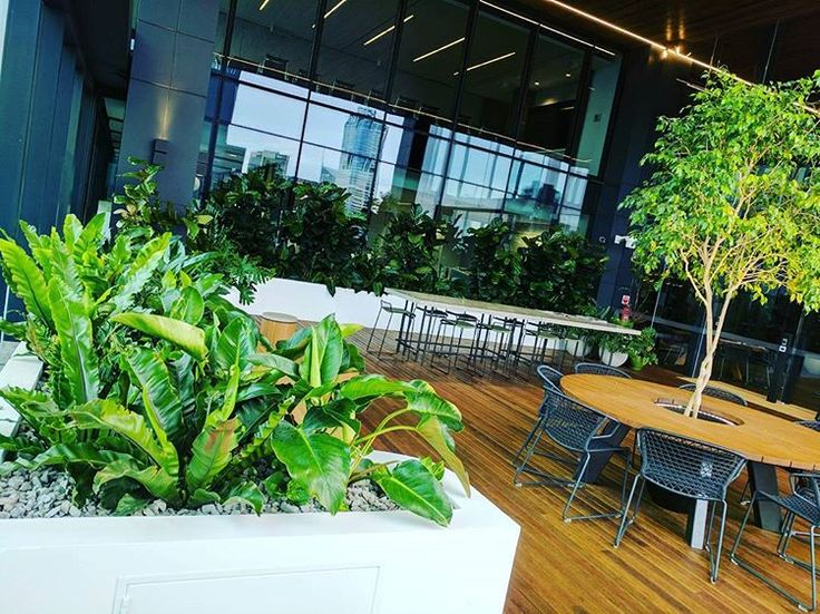 #roofgarden #rooftop #fytogreenaustralia #fytogreen #melbourne #tower2#docklandsmelb #hydroponics #plantsofinstagram #planteddesign