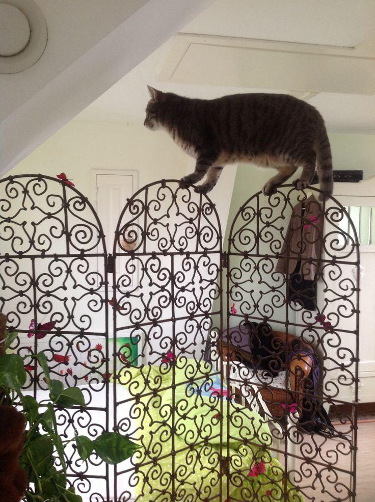 Ollie op het kamerscherm, mijn gekke kat