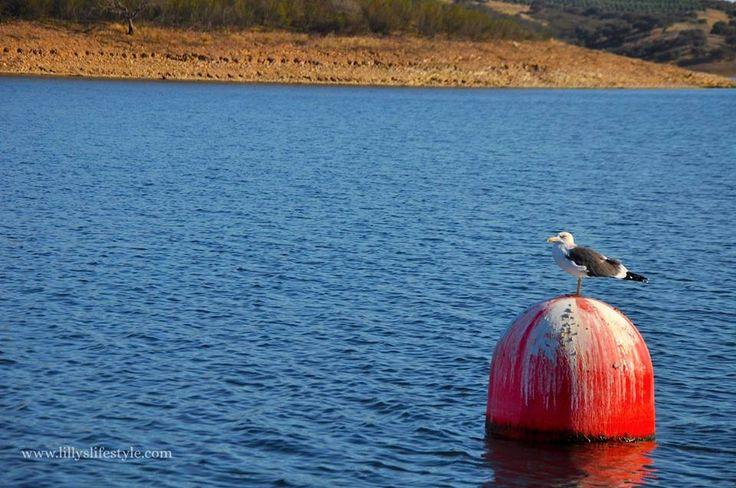 In #Portogallo si può guidare una #barca senza la patente nautica. Salpate con me? #portugal #lago #boathouse #boat #alqueva