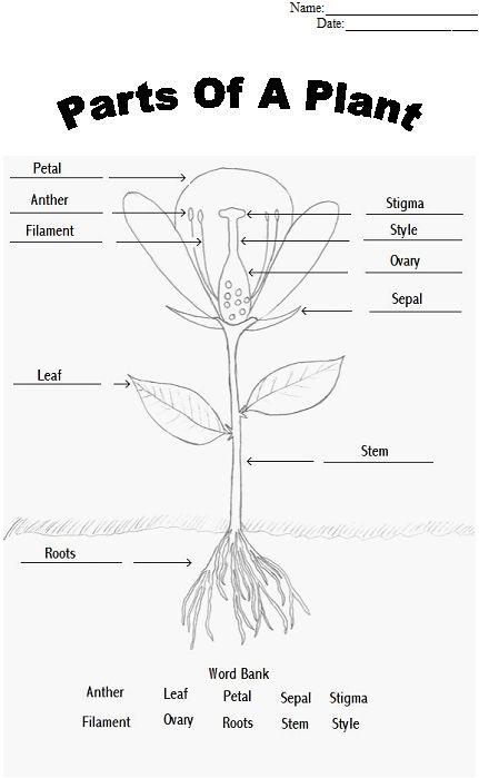 109 best botany images on Pinterest   Botany, Nature study and Plants