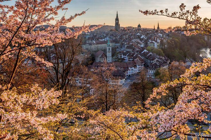 Swiss Sakura II by Jan Geerk on 500px