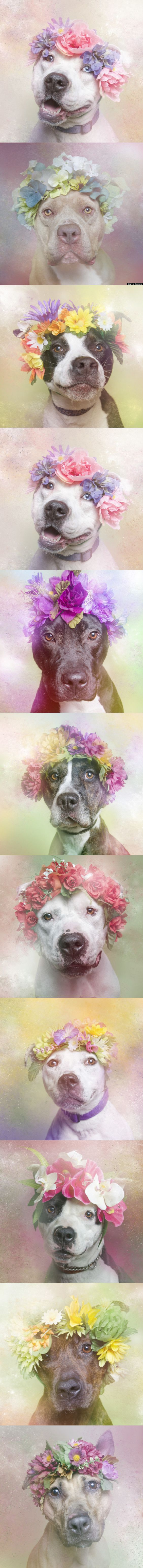 Cali is available for adoption through Sean Casey Animal Rescue. (Photo: Sophie Gamand (please follow photo link