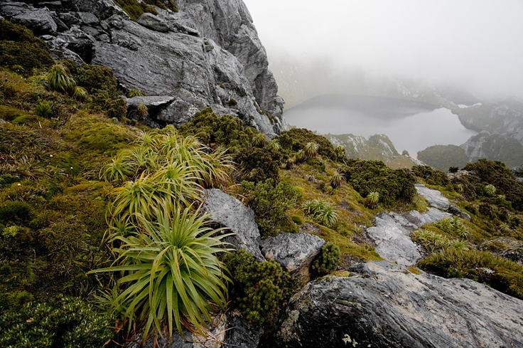 Pandania on the saddle between Mount Sirius and Mount Orion overlooking Lake Oberon, Western Arthur Range, South West National Park, Tasmania.