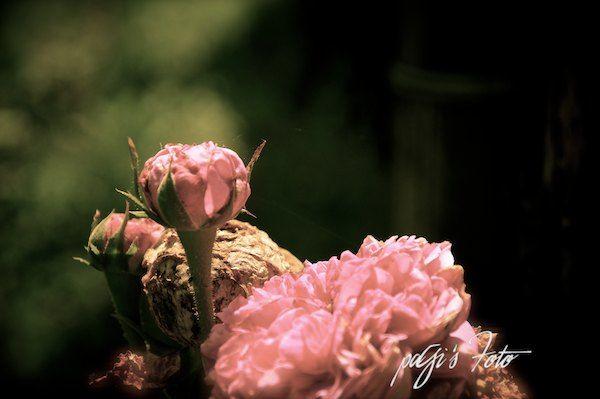 Locanda Rosa Rosae