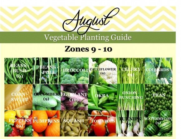 Vegetable Planting Guide | Gardening Guide | Zone 9 and Zone 10 | Southern Gardening Guide