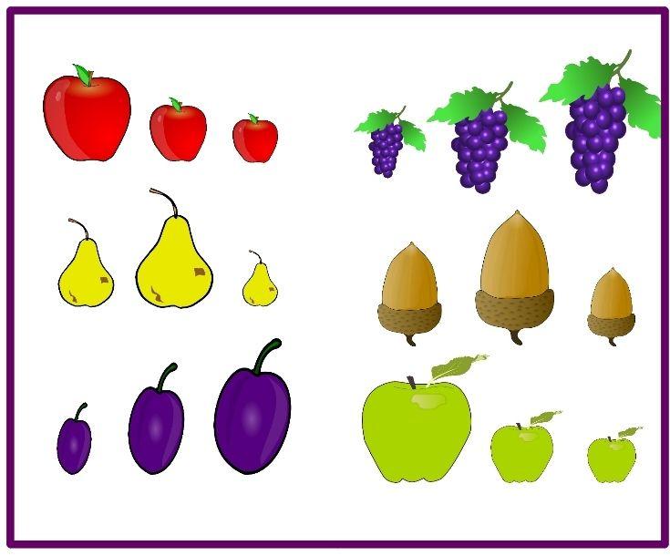 Kicsi - közepes - nagy / gyümölcsök válogatása méret szerint.