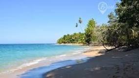 https://www.beach-inspector.com/en/costa_rica-beaches/beach-puerto_limon/playa_punta_uva