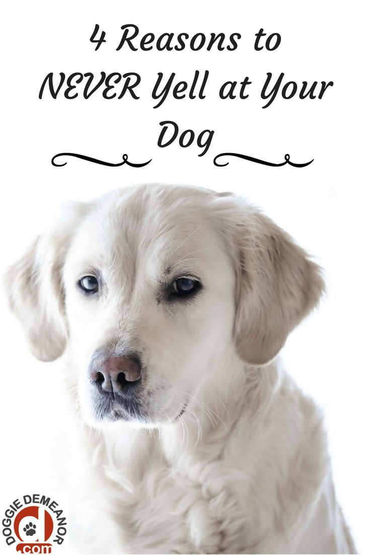 Guide Dog Rehoming >> 4 Reasons To NEVER Yell At Your Dog | Dogs, Mites on dogs, Dog health tips