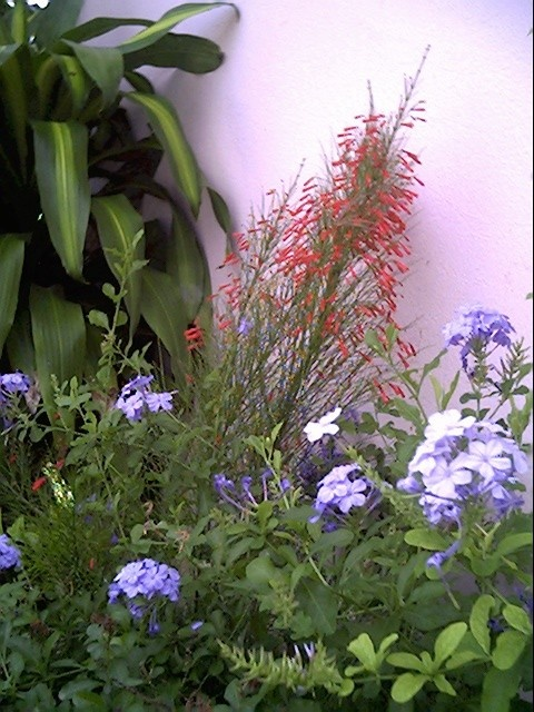 flowers of my Puerto Rico garden.