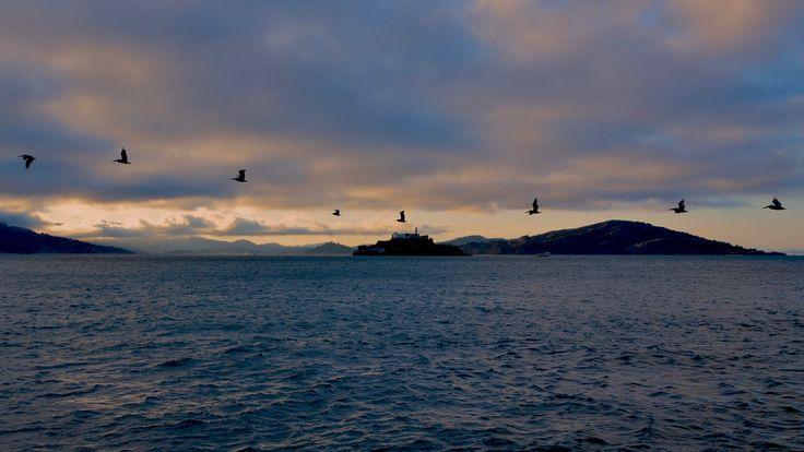 La prigione di Alcatraz al tramonto mentre uno stormo di uccelli passava. Alcatraz jail, sunset, birds.