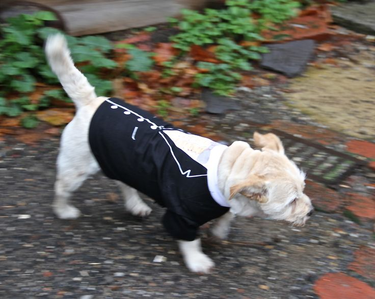 Tux dog shirt - lets go out!