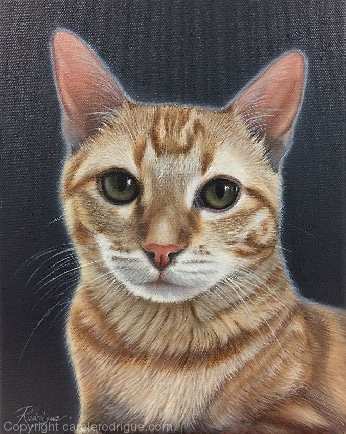 Tommy Cat Painting by Carole Rodrigue Oil ~ 10 x 8 #catpaintings #pets #petlovers #catlovers #realisticcatpaintings #petportraits #petartists #petpainters #giftsforcatlovers
