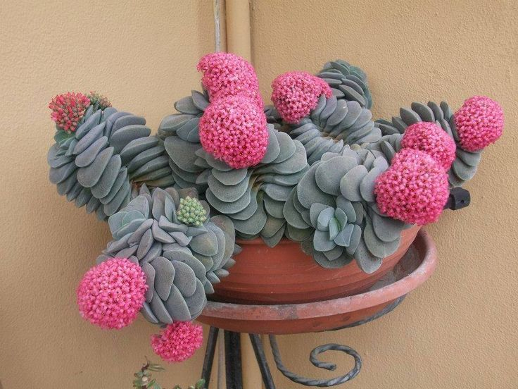 132 Best Images About Curious Plants On Pinterest Rare Succulents Agaves And Sun