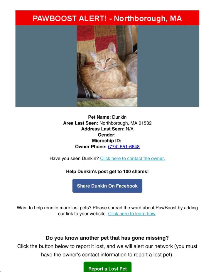 Lost Cat Named Dunkin: Northborough, MA