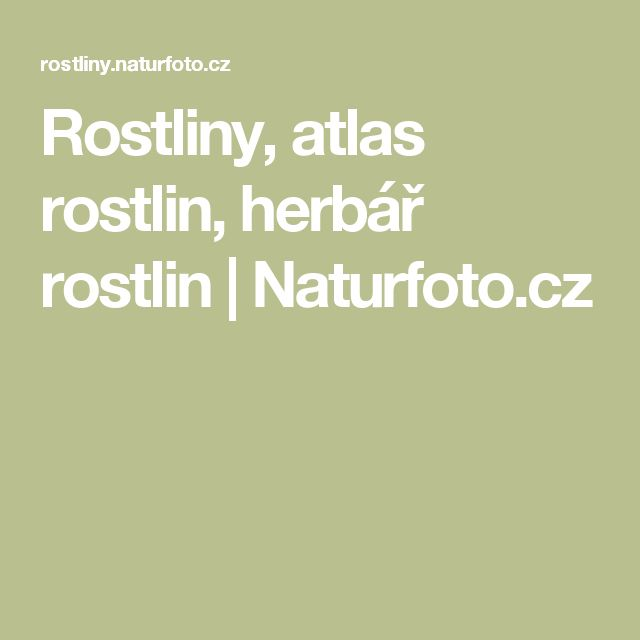 Rostliny, atlas rostlin, herbář rostlin | Naturfoto.cz