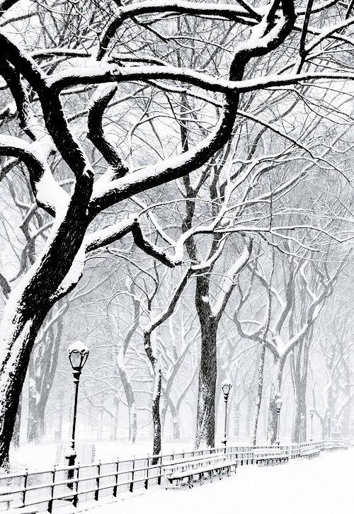 Snowy Day, Central Park NY