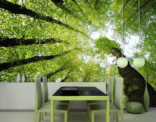 15+ Best Ideas About Fototapete Wald On Pinterest | Kopfteil ... Fototapete Grn Wohnzimmer