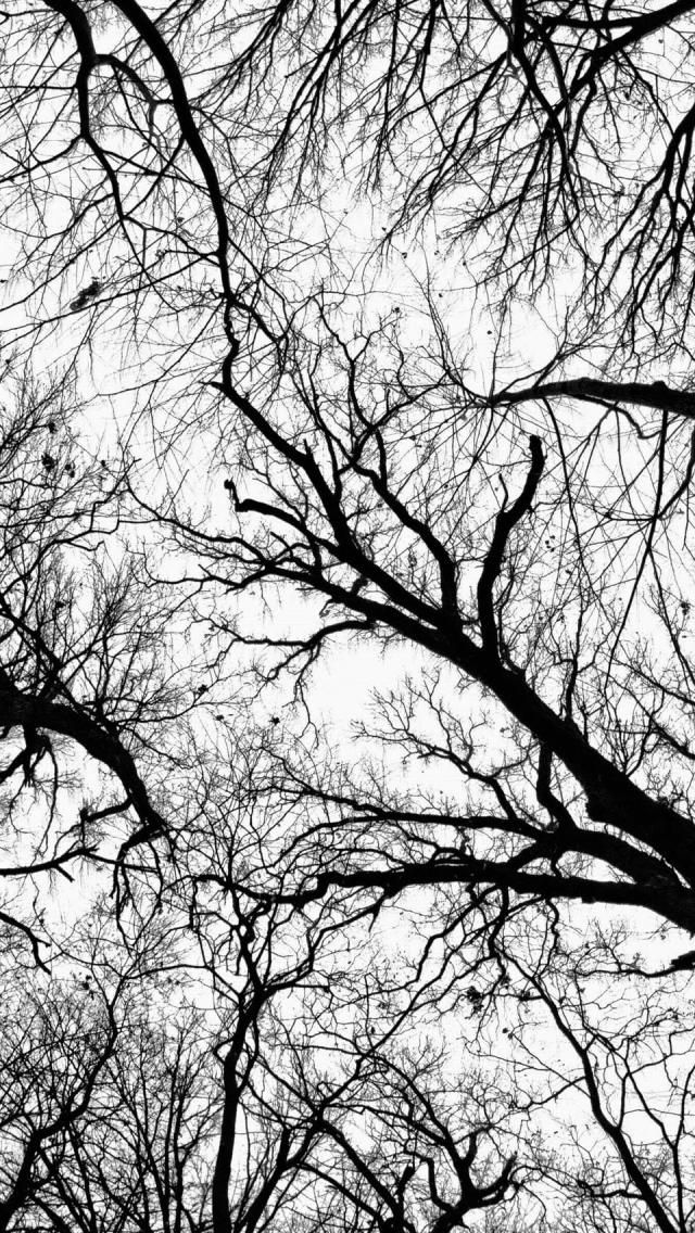 Pecan Grove Black And White HD desktop wallpaper Widescreen