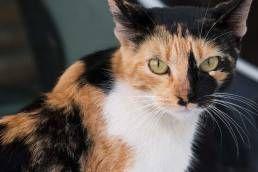 Beautiful cat in Jimena de la Frontera