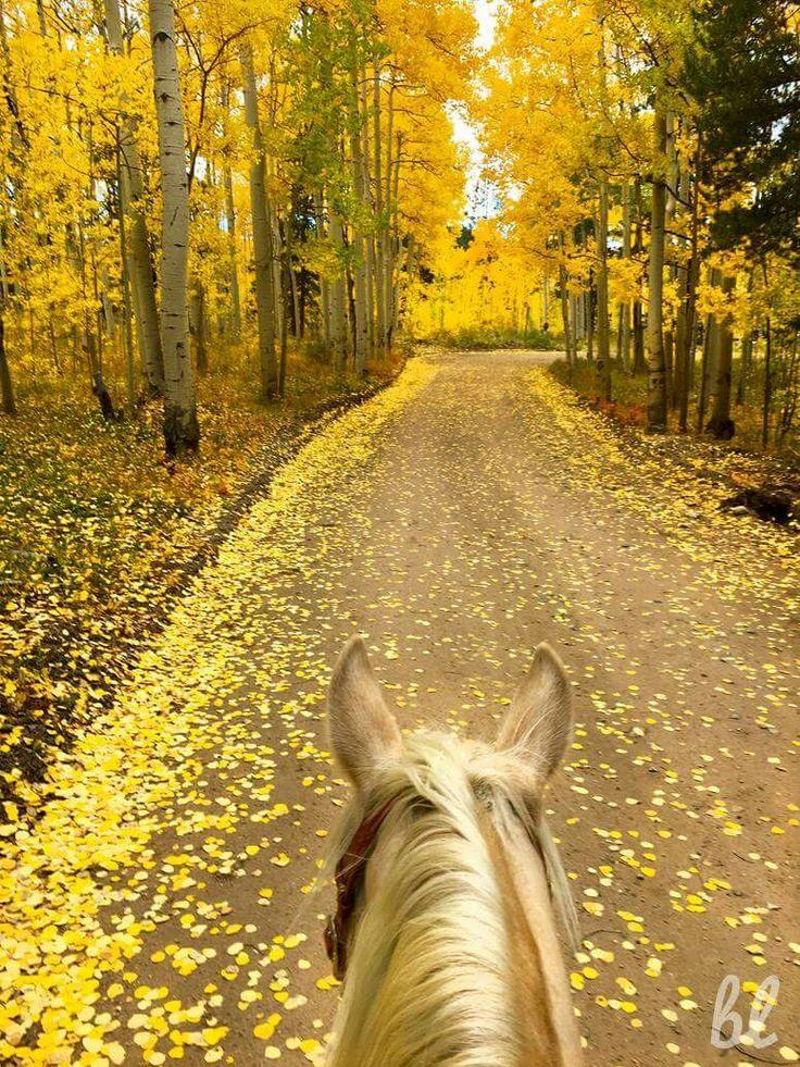 Taking a buggy ride in the Fall; through Kenosha Pass, Colorado.