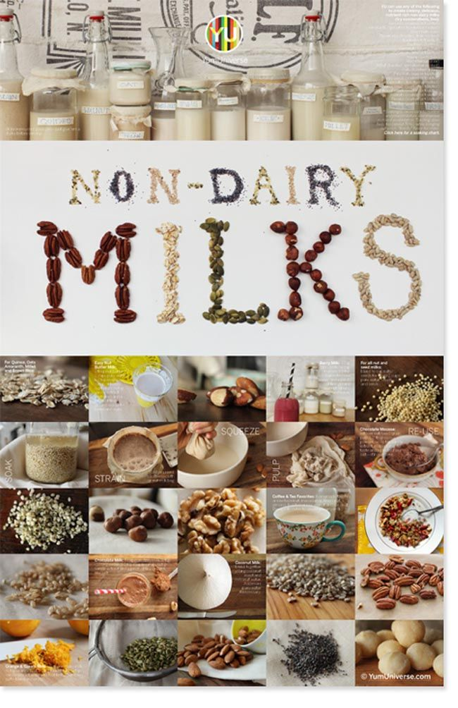 The Complete Guide to Making Non Dairy Milks