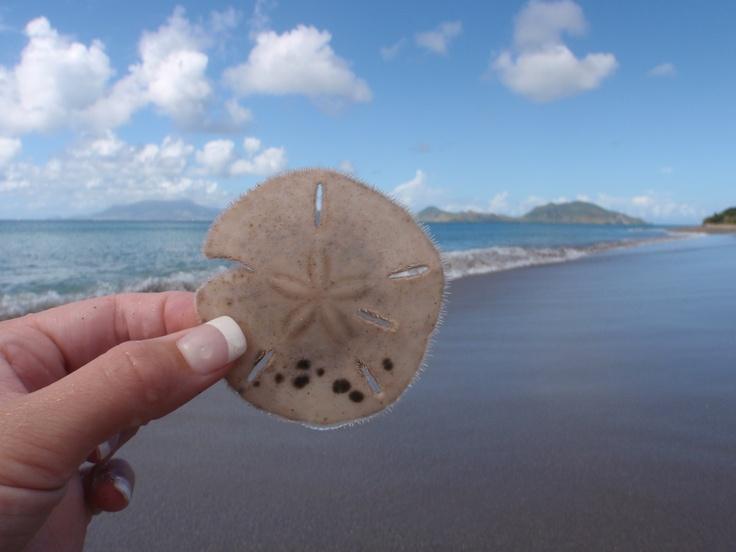 nevis island on my honey moon