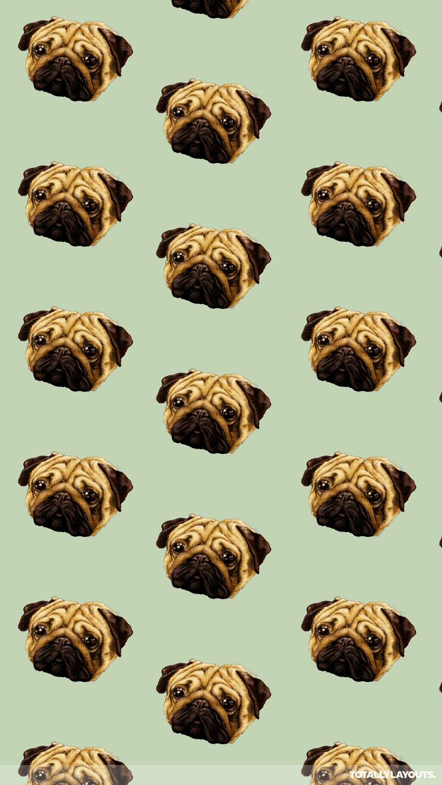 pug wallpapers for phones