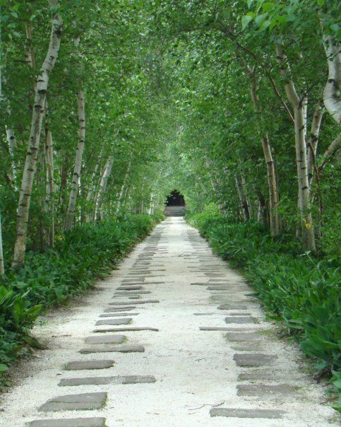 birch alley - stan hywett hall and gardens in akron, ohio home of frederick sieberling founder of goodyear tire