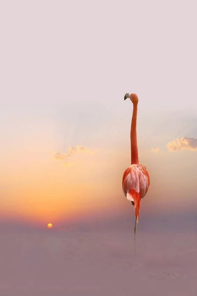 AMAZING ......... Flamingo ~ Sunset