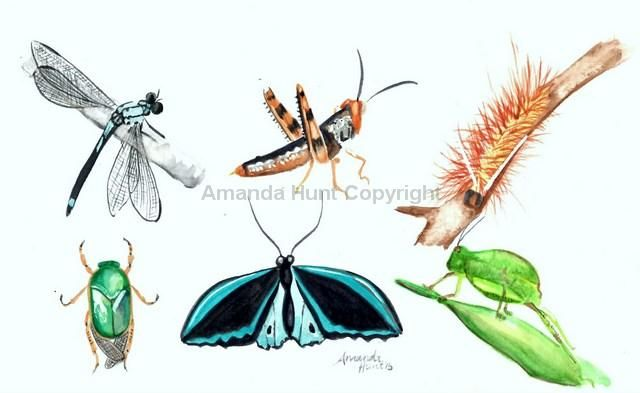 Insects. Watercolour on stretched watercolour paper.