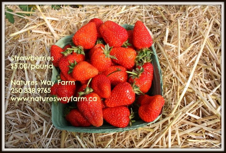 Strawberries $5 / lb Natures Way Farm www.natureswayfarm.ca