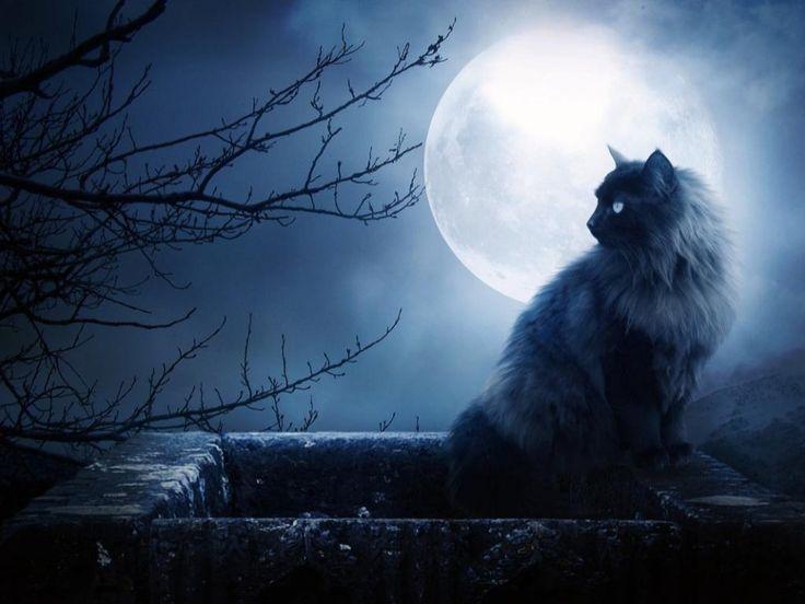 Полнолуние - 9 июля в 07:07  Полнолуние - одна из наиболее сложных и при этом наиболее сильных фаз Луны. В Полнолуние Луна находится на пике своих сил, она полностью освящается светом Солнца, отраженным от Земли. А значит в это время наше подсознание полностью открыто, а тайны полностью освещены - так же каки Луна.  Луна отвечает за наши эмоции, наше подсознание, а значит в момент Полнолуния все это приобретает максимальную силу. Именно поэтому в дни Полнолуния кто-то сходит с ума, а кто-то…