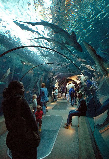 Newport Aquarium, Oregon Pretty cool place to go, especially if you are a tourist....I think it's kinda expensive....but...the kids love it..