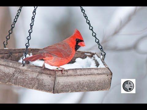 Identify Birds at feeders