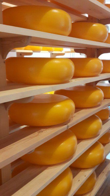 QUEIJOS Distribuidora de Queijos Como Montar uma Distribuidora de Queijos O queijo é uma alimento sólido elaborado com leite. Pode ser elaborado com diversos tipos de leite como: vaca, ovelha, cabra e búfala. Tem importante papel de nutrição na alimentação humana. Alguns possuem alto teor de gordura. Para saber mais entre: www.engetecno.com.br