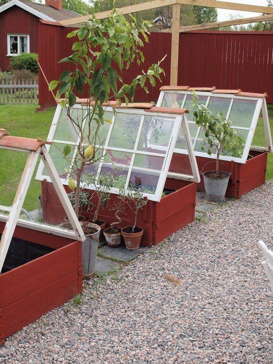 Har man varken tid, råd eller utrymme att ha ett växthus kan man göra på det här viset. Pallkragar med fönster, gjort på ett snyggt och stilfullt sätt. Källa: Homeedit.com