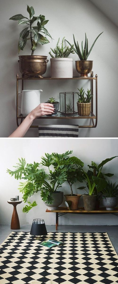 Stylish Houseplant Pots for Indoor Gardening