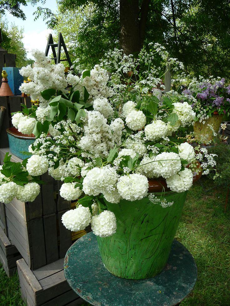 25 best ideas about bouquet de lilas on pinterest - Boule de neige plante ...