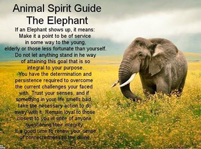 Elephant. Service to others, determination, persistence, loyalty, trust.