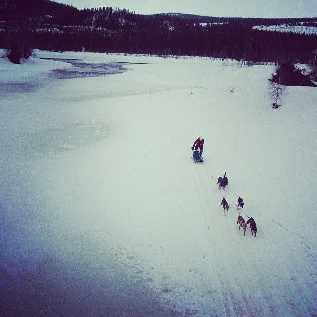 The four day race Vindelälvsdraget, along Vindelälven, is one way to enjoy dogs in Sorsele, Swedish Lapland. #vindelälvsdraget #alongvindelalven