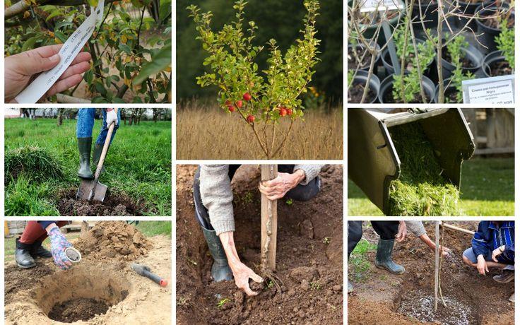 Коллаж - посадка деревьев осенью