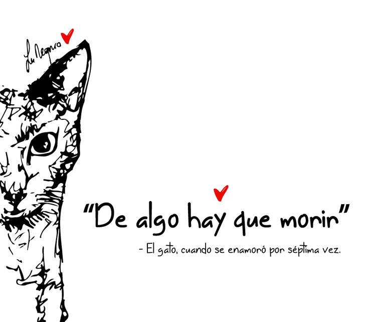 Dijo el gato romántico.