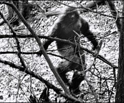 The 10 Most Convincing #Bigfoot Photos Ever Captured ... I think the whole thing is a joke