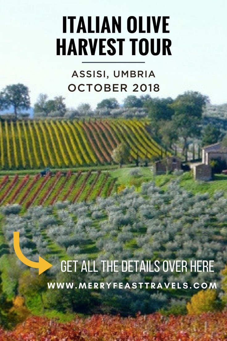 Italy Travel: Join us in Italy for the Olive Harvest, a beautiful and delicious time of year to explore Umbria. • This culinary adventure is for anyone who loves to learn about a culture through diving into the food of the region. • Our days together will be spent experiencing the wine, gastronomy and culture of Umbria and enjoying the magic of Italy in Autumn. • We take care of everything from the moment you arrive in Assisi, until you leave. #italy #traveltips #foodtravel