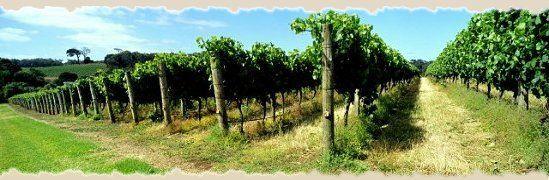 Chateau Lafayette Reneau - Award Winning Wines, Charming Winery Estate & Inn, Near Beautiful Seneca Lake in New York - Cabernet Sauvignon, #senecalake #fingerlakes #clrwine