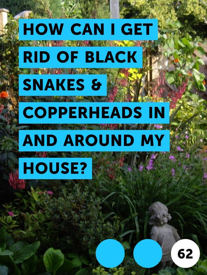 Learn How Can I Get Rid Of Black Snakes Copperheads In And Around My House How To Guides Tips And Tricks Snake Repellant Keep Snakes Away Snake