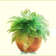 Plante en perles petite foug re verte plantes vertes en - Fougere de boston depolluante ...
