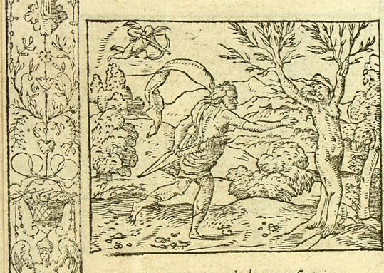 Daphné changée en laurier (Métamorphose Lyon 1557) - Bernard Salomon