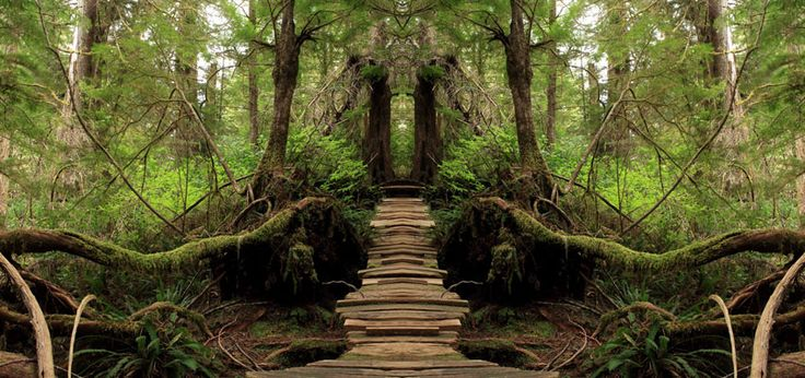 Manipulated forest trail