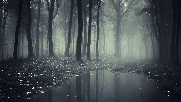 2016-09-12 - dark forest pic desktop, #18905